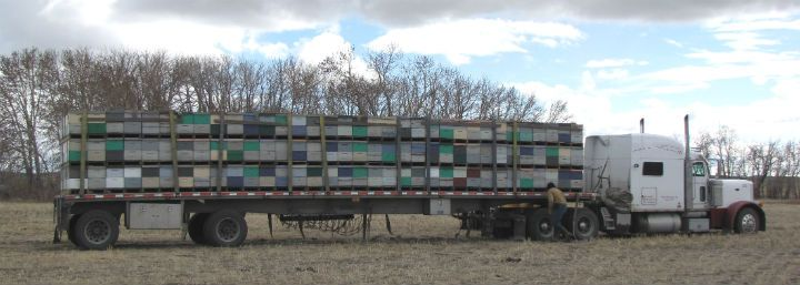 hives on flatbed
